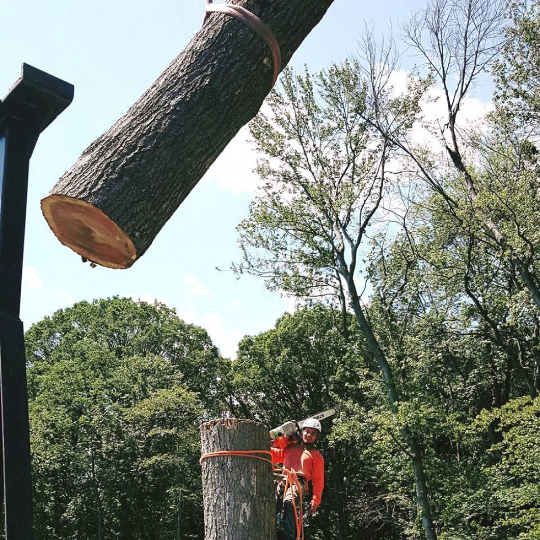 How Do You Remove Unwanted Trees in Northern NJ?