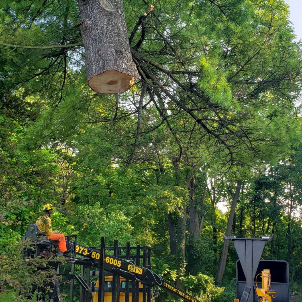 How Do You Remove Unwanted Trees in Byram Township, Andover, Sparta Township & Northern NJ?