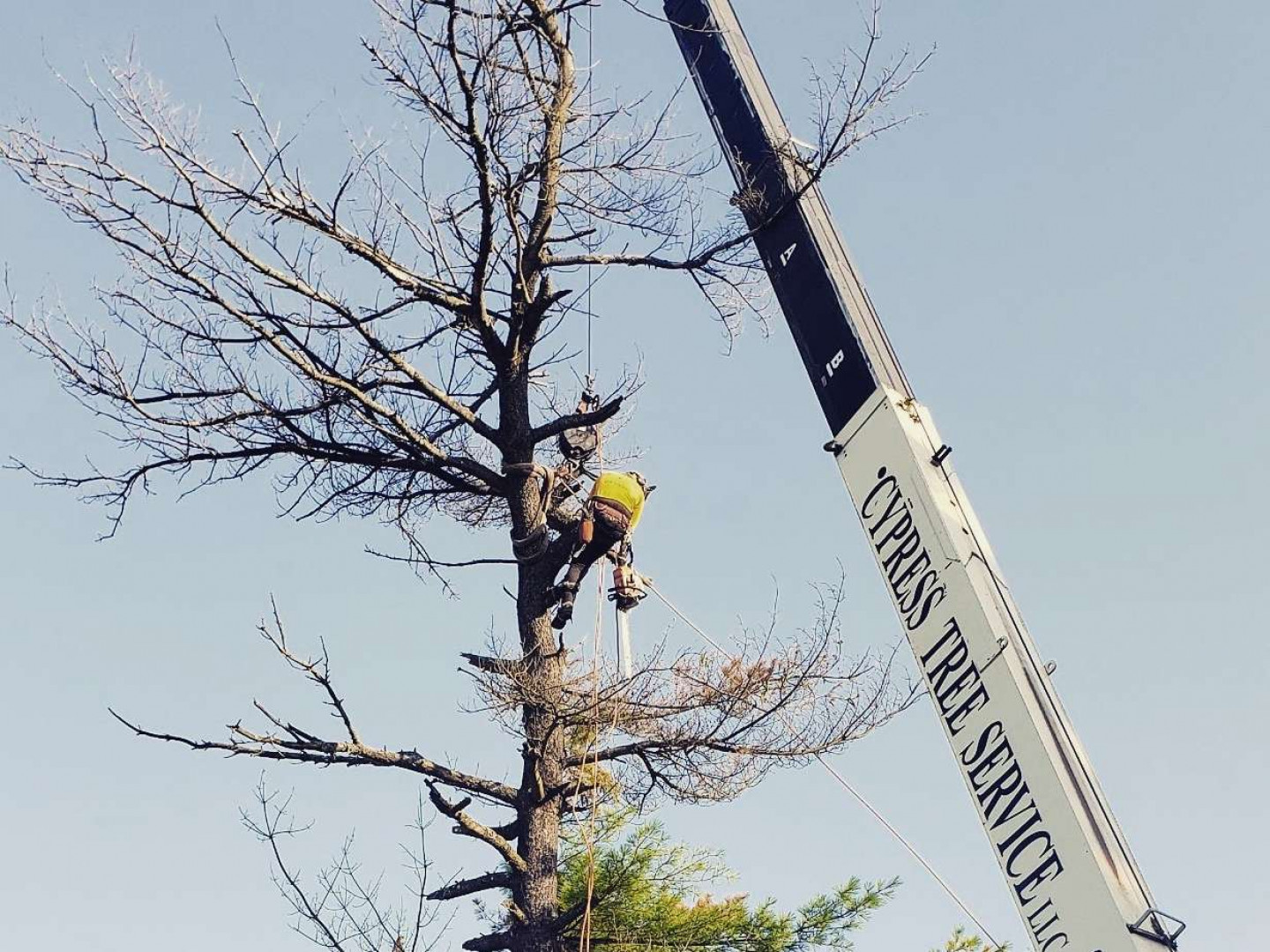 tree trimming byram township nj
